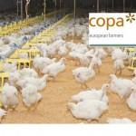 Copa + chicken