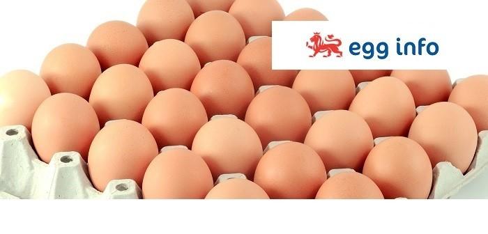 eggs + egg info