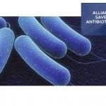 Alliance antibiotcs