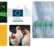 AMR poultry EC Oct 24