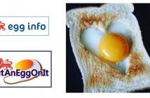 Egg info 17500 followers
