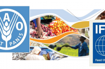 FAO + IFIF