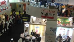Turkey poultry