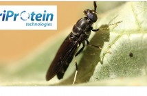 AgriProtein insects Nov 29