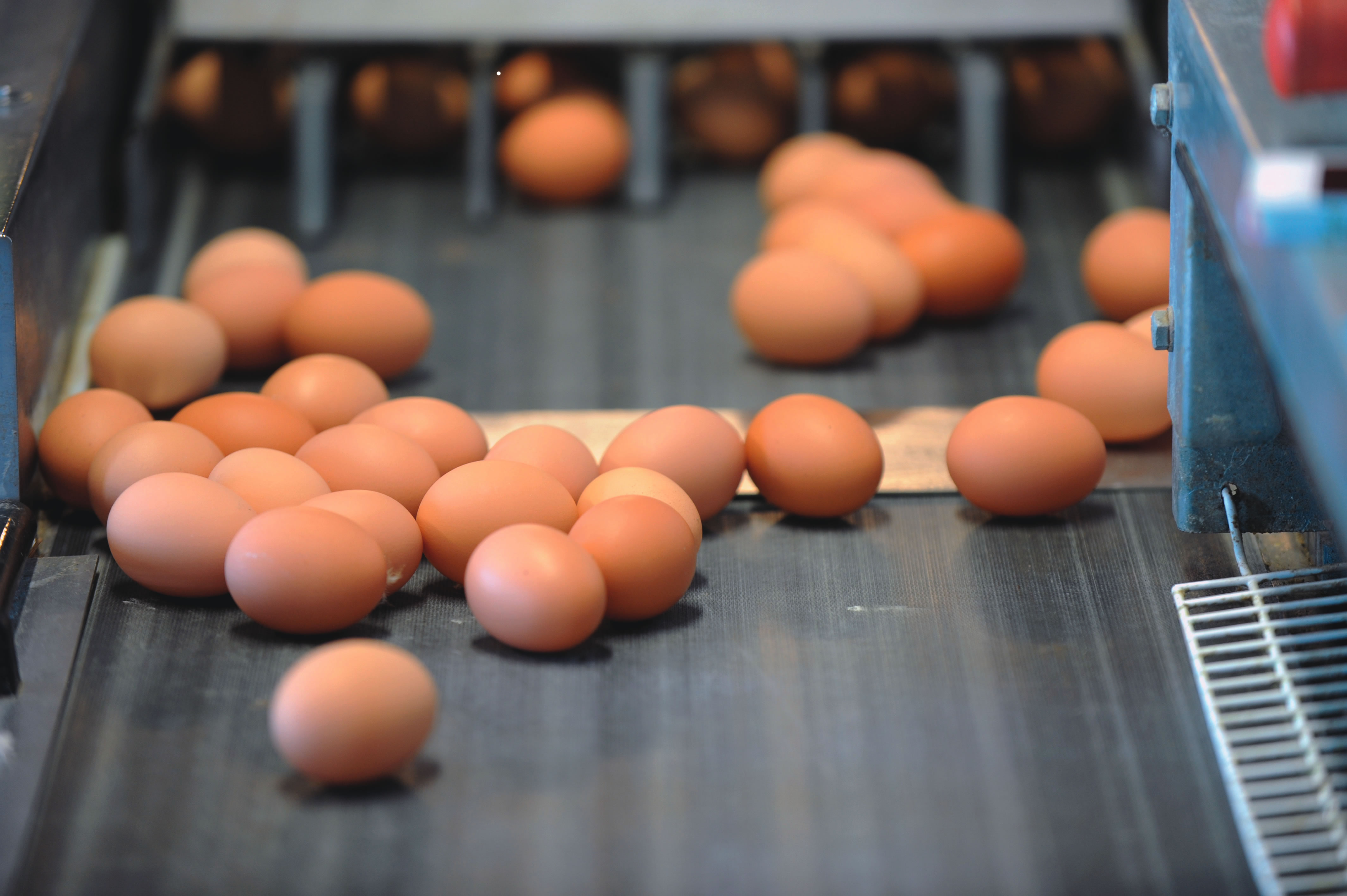 Egg prices rise due to flu | Poultry News