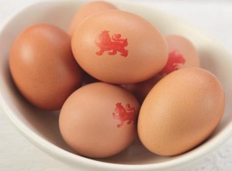 lion eggs