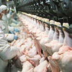 chicken processing
