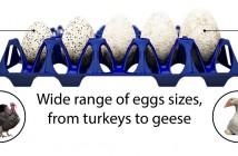 Twinpack egg tray