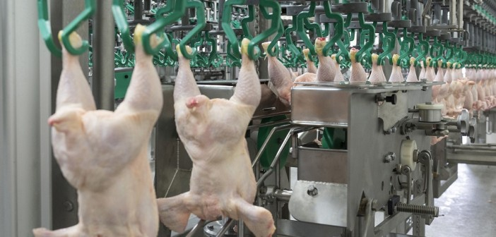 New Meyn equipment processes poultry at 15,000 bph