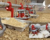Modified feeder offers improved access