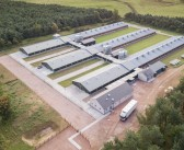 UK poultry breeding programme gets investment boost