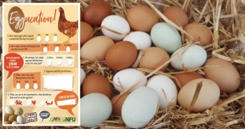 eggucation