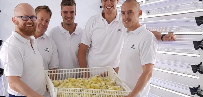 hatchcare chicks