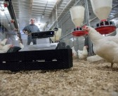 Feature: Are we ready for Poultrybot and Robochick?