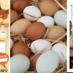 eggucation-August