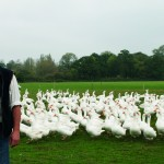 bill with his geese