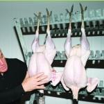 paul kelly turkeys