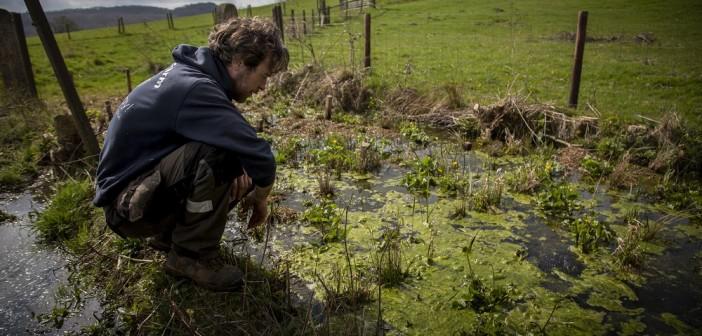 Ian Steele looking over the reedbed at Treflach Farm