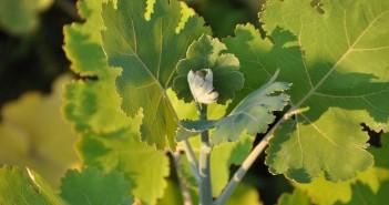 Feed & nutrition supplement. Azelis pic. Use large. Sangrovit plant