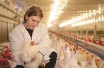 vet in broiler house