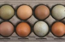 organic egg box