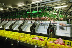 Ishida Van Miert - Whole chicken processing line (1)