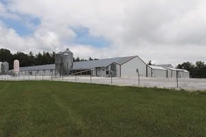 Avian flu feature Biosecure farm