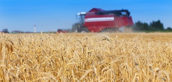 Premier Nutrition wheat