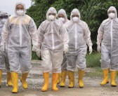 New cases of avian influenza confirmed in England