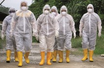 bird flu biosecurity