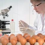 salmonella testing