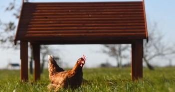 Happy Egg FarmCirkle PR