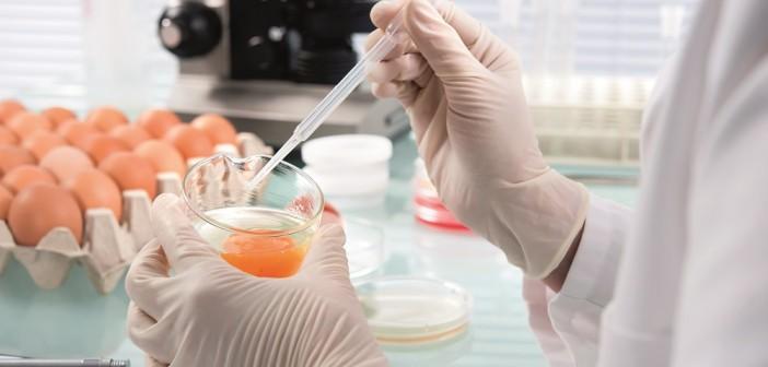 salmonella testing (2)