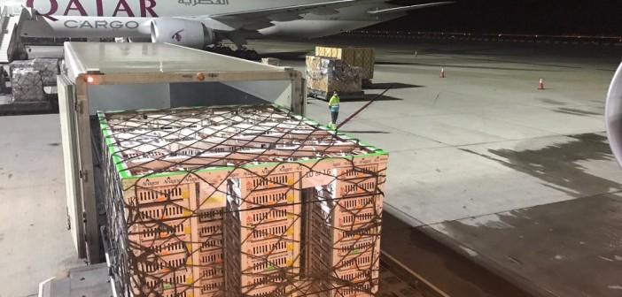 Qatar airplane and pallet