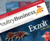 Protected: Poultry Business September 2020