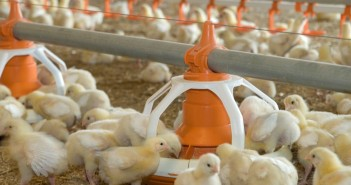 Change in law to allow animal protein in feed moves one step closer