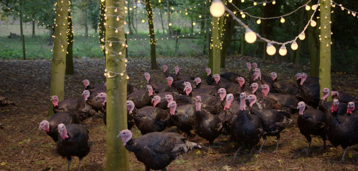 RSPCA turkey ad