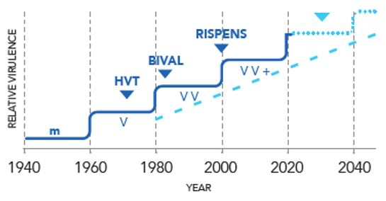 Stepwise evolution of virulence of MDV isolates: past history and future predictions - Adapted graph from Witter, 1998, page S504