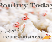 Poultry Today Podcast: the labour crisis