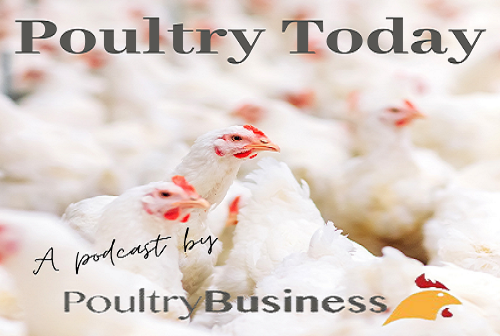 Poultry Today Logo